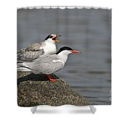 Common Tern Pictures 76 Shower Curtain