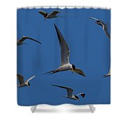 Common Terns Collage Shower Curtain