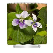 Common Violet Shower Curtain