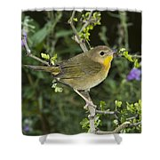 Common Yellowthroat Hen Shower Curtain