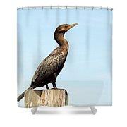 Comorant And Blue Sky Shower Curtain