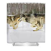 Competing Shower Curtain