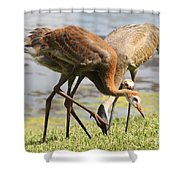 Competition Shower Curtain