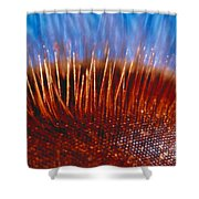 Compound Eye Of A Bee Shower Curtain
