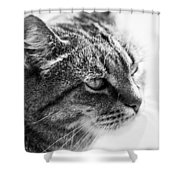 Concentrating Cat Shower Curtain