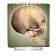Conceptual Image Of Human Skull, Side Shower Curtain