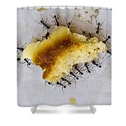 Concerted Action Shower Curtain