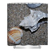 Conch 2 Shower Curtain