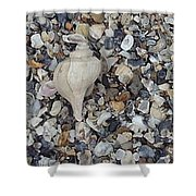 Conch Among A Sea Of Shells Shower Curtain