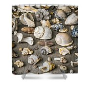 Conch Background Shower Curtain