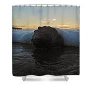 Conch Shell In Surf 3 10/17 Shower Curtain