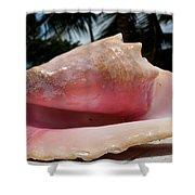 Island Conch Shell Shower Curtain