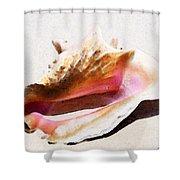 Conch Shell - Listen Shower Curtain