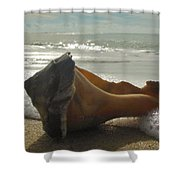 Conch Shell The Point 1 12/5 Shower Curtain