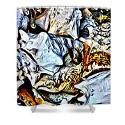 Conch Shells From St John Shower Curtain