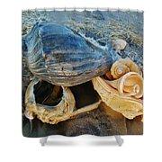 Conch Shells Hatteras 5 10/17 Shower Curtain