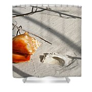 Conch With Shell In Sand I Shower Curtain
