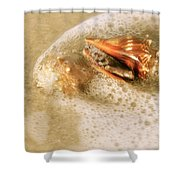 Conchs In Surf 1 Antique Shower Curtain