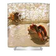 Conchs In Surf 2 Antique Shower Curtain