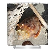 Conchs With Driftwood I Shower Curtain