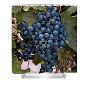 Concord Grapes Shower Curtain by Leeon Photo