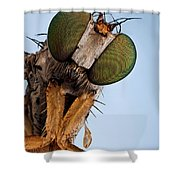 Condylostylus Sp 81 Shower Curtain