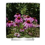 Cone Flower And Bee Shower Curtain