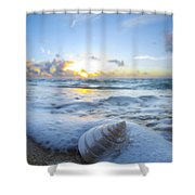 Cone Shell Foam Shower Curtain
