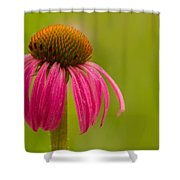Coneflower - Summer Color Shower Curtain