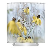 Coneflower And Bee 1  Shower Curtain