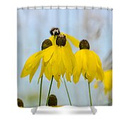 Coneflower And Bee 2  Shower Curtain