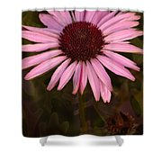 Coneflower And Dusty Miller Shower Curtain