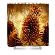 Coneflower Deadhead Shower Curtain