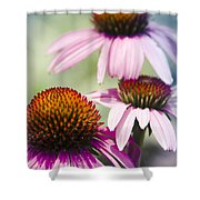 Coneflower Jewel Tones - Echinacea Shower Curtain