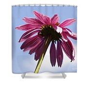 Coneflower  Shower Curtain by Tony Cordoza