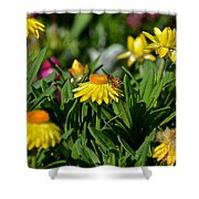 Coneflowers And Friend Shower Curtain