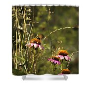 Coneflowers Weeds And Bee Shower Curtain
