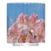 Confectioners Pink Shower Curtain