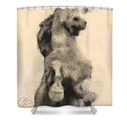 Conflict Shower Curtain