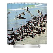 Congregating Skimmers Shower Curtain