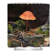 Conical Wax Cap Mushroom Shower Curtain