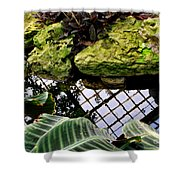Conservatory Reflections Shower Curtain