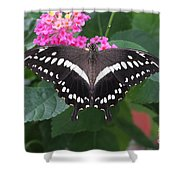 Constantines Swallowtail Shower Curtain