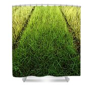 Container Art Shower Curtain
