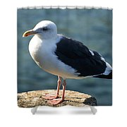 Contemplating Life Of A Sea Gull Shower Curtain