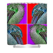 Contemporary Pelicans Shower Curtain