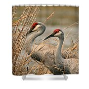 Content Pair Shower Curtain