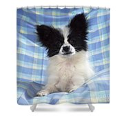 Continetal Toy Spaniel Or Papillon Dog Shower Curtain