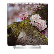 Contrast 1. Pink Spring In Amsterdam Shower Curtain