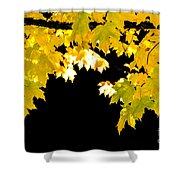 Contrast Of Autumn, Quincy California Shower Curtain